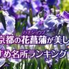 京都の花菖蒲(ハナショウブ)が美しいおすすめ名所ランキングTOP5