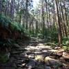 世界遺産熊野古道を歩く!馬越峠から天狗倉山、おちょぼ岩まで日帰りルート