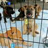 熊本の被災ペット、収容限界に 東京で譲渡会も