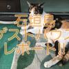 石垣島:格安ゲストハウス紹介!