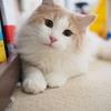 妊娠中に猫を飼う時に気をつけるべき3つのコト!突然の猫アレルギーに注意