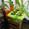 自宅ルーターとNASの廃熱で野菜を育てる