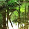 森林の中でセミの抜け殻と、透明度の高い池を撮影しました