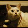 猫好き必見!「猫侍」あらすじ・感想と評価 おもしろ過ぎ…