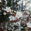 中年男性がロンドンで春~spring~の訪れ感じる