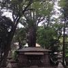 武速神社 樹齢千年以上の将軍杉