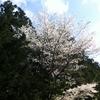 北海道への旅2 北海道神宮での遭遇編