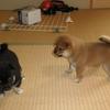 子犬のお宝画像を放出 Part2 (2013年)