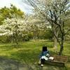 水元公園の八重桜