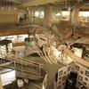 【観光】東北大学総合学術博物館に行ってきた