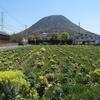 飯野山(422m)・・・香川県丸亀市・坂出市