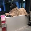 トレンチコートを着たライオン像 at 日本橋三越
