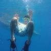 """【セブ島留学】セブ島の南端で世界最大の魚""""ジンベイザメ""""とツーショットを撮ってきた【週末バカンス】"""