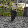 3月前半の #ねこ #cat #猫 その3