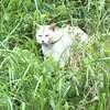 TNR さくら猫サポートプロジェクト 白ちゃん怪我をする