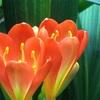 南アフリカで見られる人気のお花7選!南アフリカはめちゃくちゃ美しかった