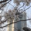 桜はまだ早かった(^^)
