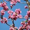 府中郷土の森博物館の春の花木。