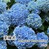 【大阪】梅雨の季節に映える花
