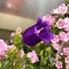 紫色の花も開花!