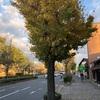 京都北山を歩く、やはり有酸素運動が必要だなあ