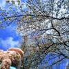 お花見お散歩デートと食べ歩きスタンプラリー♪