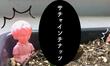 【スーパーフード】サチャインチナッツが芽を出しました!