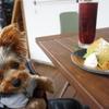 和食の美味しい💛【ごはんカフェ笑~emu~】テラスペットOK