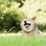 アニスピホールディングスの「日本初のペット共生型障がい者グループホーム」をご紹介🐶アニマルセラピーで人間も動物もハッピーに🐱