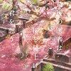 【あらすじと感想】『最後の医者は桜を見上げて君を想う』は生死観を問う名作