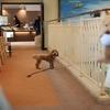 ワンコと初めての旅行|ペット専用の宿泊ホテルへ泊まってみて