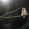 金沢動物園はメルヘンワンダーランド