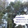 【独女深夜映画部】「クローバーフィールド」がナウシカ不在のナウシカの世界だった!怪しい日本企業が気になる