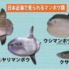 第190話 日本一重い硬骨魚に認定~千葉県