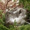 野鳥のヒナ 最後の一羽も無事に巣立って・・