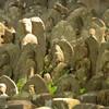 東京・稲城の「ありがた山」 その驚くべき光景