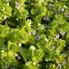 暑い夏こそ育てたい!涼を感じる水生植物10選
