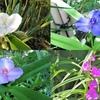 写真保存を兼ねたブログ 5月徒然 風薫る初夏の多門院の花