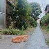 品川の穴場スポット!品川宿〜品川神社さんぽ