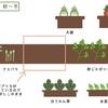 【菜園マップ】行き当たりばったりの私の菜園マップ 2018年冬①