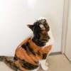 【愛猫日記】毎日アンヌさん#103