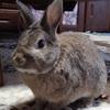【北海道】ホクレン「くるるの杜」~うさぎの餌(葉大根)を探し求めて~