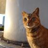 11月前半の #ねこ #cat #猫 その1