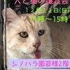 「12/22 譲渡会のお知らせ」のお知らせ