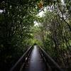 【子連れ沖縄旅行記13】慶佐次川のマングローブの森