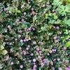 春と飛沫感染