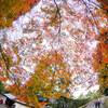 12/11 (水)薄曇り後本曇り‥気温は高め