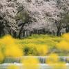 滋賀県余呉川と彦根城のお堀