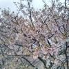 #568 ようやく春到来!
