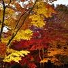 香雪園の紅葉ライトアップ…